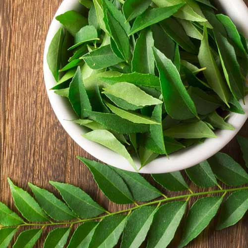 benefits of curry leaves for weight loss